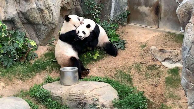pandas-gty-ml-200407_hpMain_16x9_992